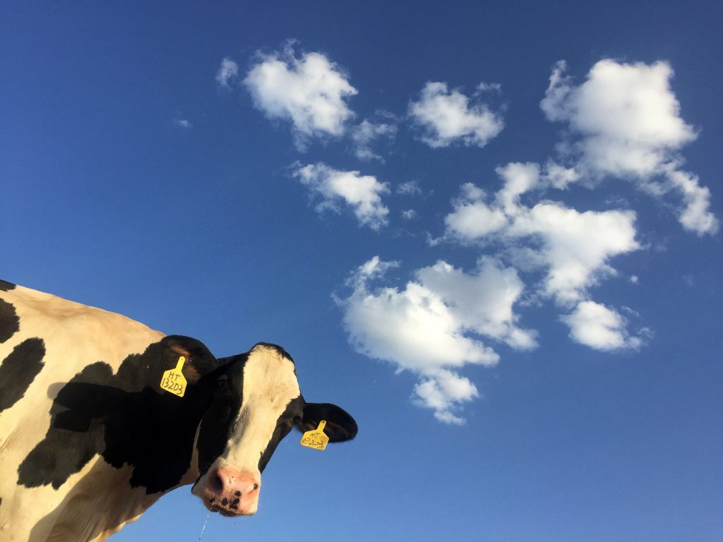 Cow and Sky Background Image for 404 Page