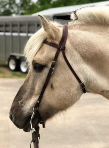 Sandy-colored horse with leather halter. You see the horse's face in profile.