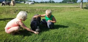 Young girl in pink and young boy in green bending down to pet black pot-belly pig in green field.