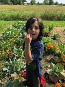 Young boy in dark shirt eating berry in front of vegetable and fruit garden.