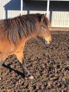 Photo pf brown horse with brown mane